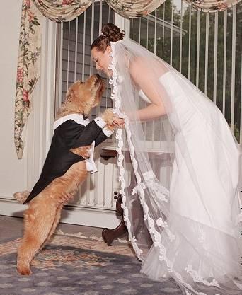 married Dog