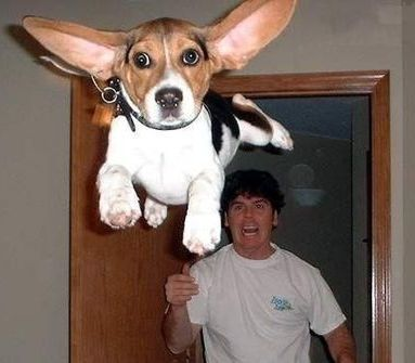 Flying dog picture