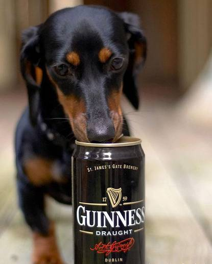 Guinness beer for Dogs
