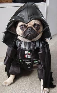 Fun Dark vader Dog