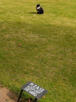 Exhibit A: Cat on grass