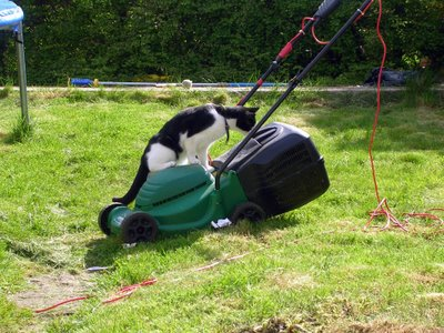 kizzy inspects the lawnmover