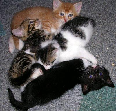 4 naughty kittens