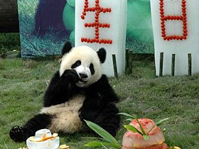 panda celebrates 1st birthday