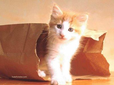 15 Cosas que no sabias de los gatos