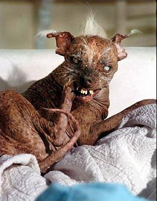 Sam: The World's Ugliest Dog