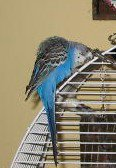Could this be the lost blue bird?
