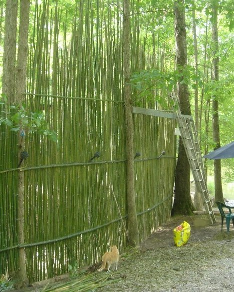 The Four Bears In The Woods The Great Bamboo Wall