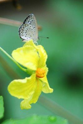 小蝴蝶快來授粉,幫我實現夢想!