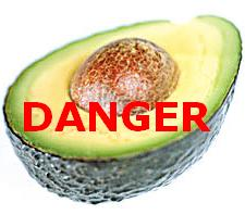 The Dangers of Avocados