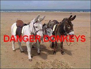 Nanny's Donkey Inspectors