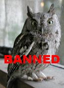 Nanny Bans Owls