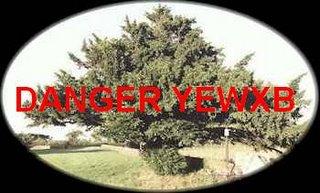 Nanny Bans Yews