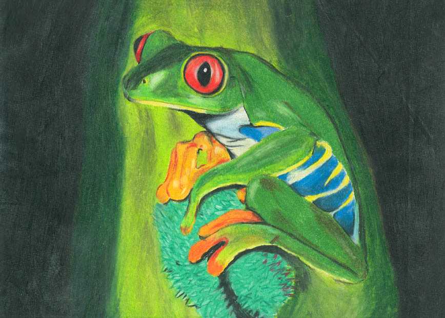 la voz sin boca / isak: una rana(dibujo a lapiz de color)