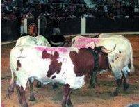 publicidad en los toros