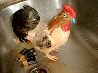 How low can a Chicken sink. At least he didn't make me wear that bloody catsuit