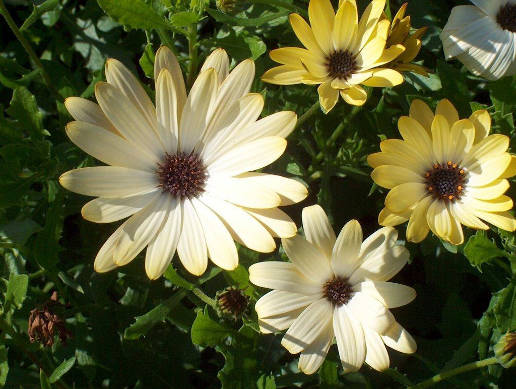 sejour a edinburgh vendredi 14 juillet fleurs du jardin botanique. Black Bedroom Furniture Sets. Home Design Ideas