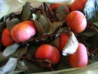 Bag of persimmons