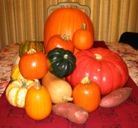 Our pumpkin haul