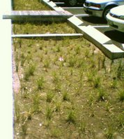 Bioretention swales at Harbour Quays