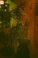 Mystery Bar #47 - pot plant