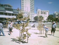 Petanque at Waitangi Park in March 2006