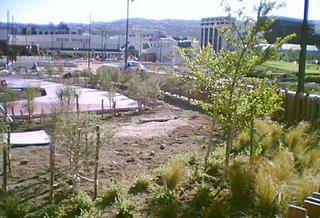 Waitangi Park playground - the manuka tunnel