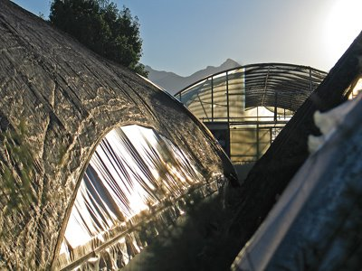 Greenhouse at Sunrise