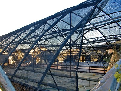 Greenhouse at Sunrise