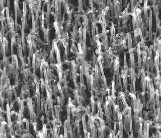 culture de nanotubes