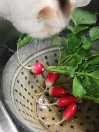 Somebody catch that radish thief!