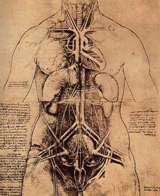 Leonardo da Vinci [1452-1519] | desenho | estudo anatómico do tronco feminino | s.d.