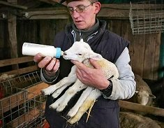 Six-legged lamb
