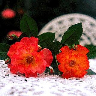 Rosa de Plástico