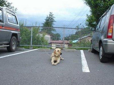 fotos de animais - estacionamento
