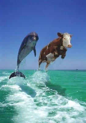 Imagem golfinhos