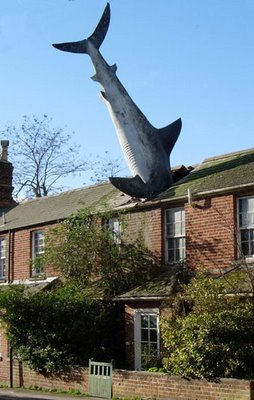 shark big Friday Funny: It's a Bird! It's a Plane! It's a...SHARK???