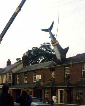 shark crane Friday Funny: It's a Bird! It's a Plane! It's a...SHARK???