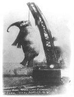Mary, la elefanta que murió en la horca