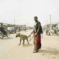 Paseando la hiena