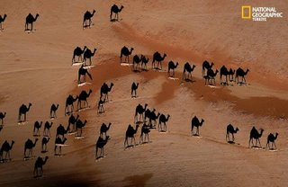 Sombra de una caravana de camellos sobre desierto turco (National Geographic)