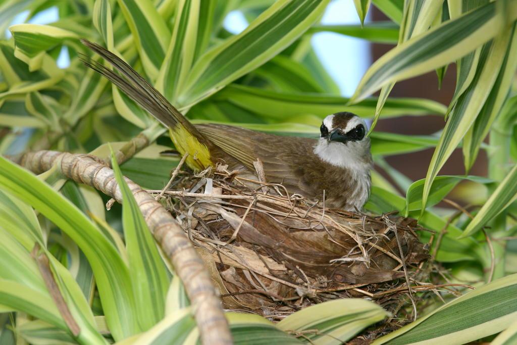 Bird Data Logger : Bird ecology study group nature society singapore july