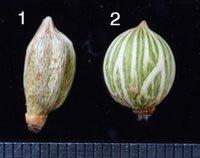 Forensic birding 4: Seeds
