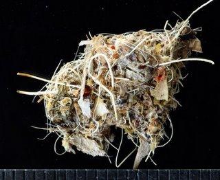 Forensic birding 3: Pellets