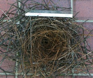 House Crows' nests