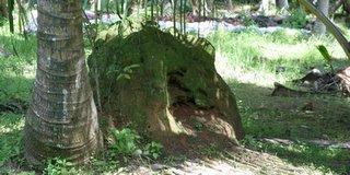 Termite hatch