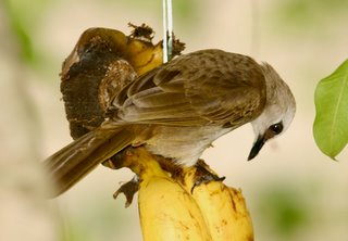 Feeding protocol among some common birds