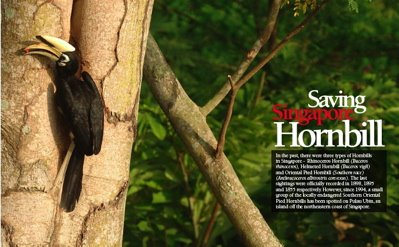Hornbill Project Singapore