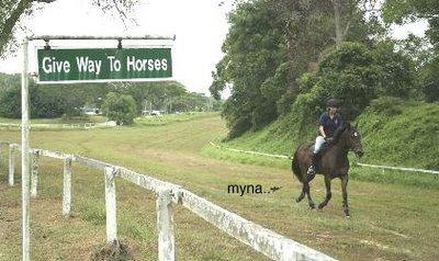 Myna-horse relationship