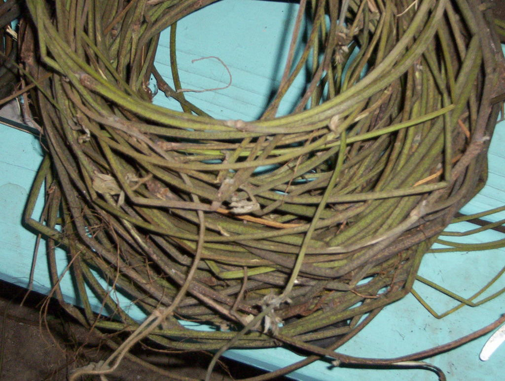 Basket Weaving Using Vines : Natural baskets kudzu pueraria montana preparing